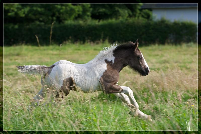 Les chevaux du Triskell - 11/11/2011 20090617_1083