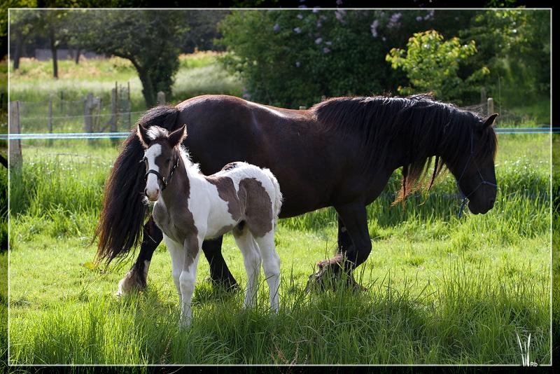 Les chevaux du Triskell - 11/11/2011 20100516_0399