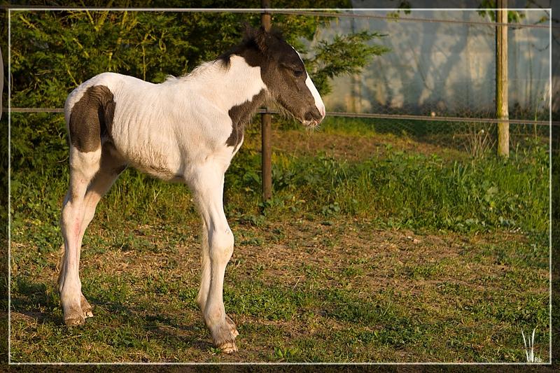 Les chevaux du Triskell - 11/11/2011 20110426_5770