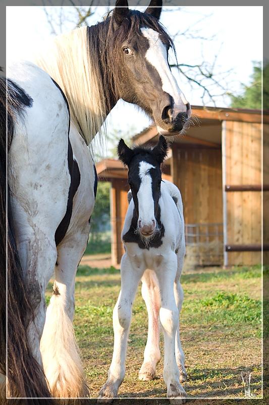 Les chevaux du Triskell - 11/11/2011 20110426_5778